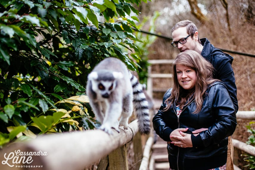 Pre Wedding Shoot at Dudley Zoo