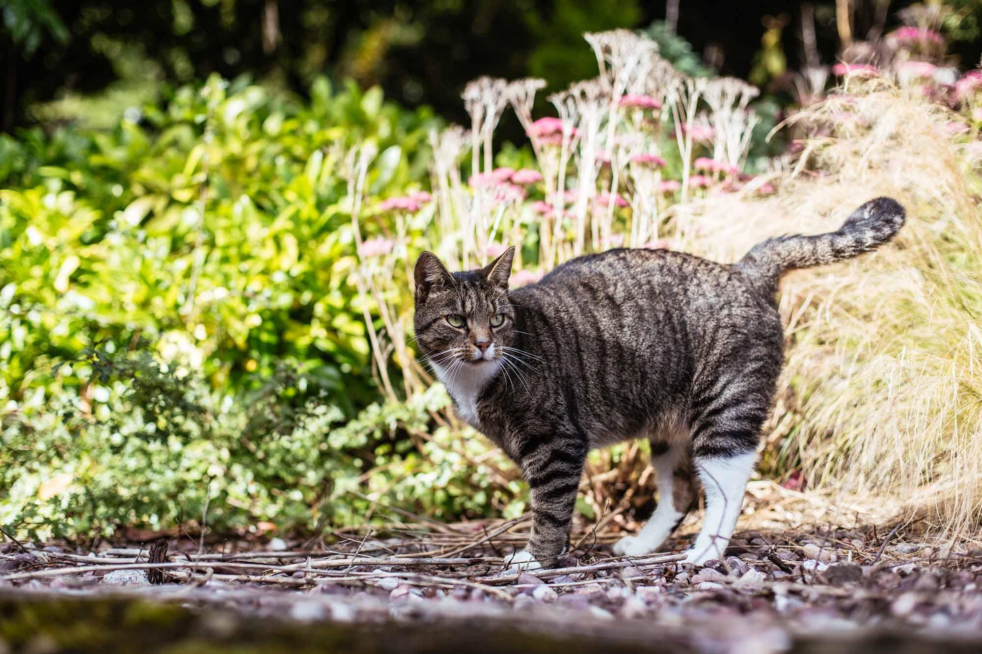 Cressbrook Hall Cat