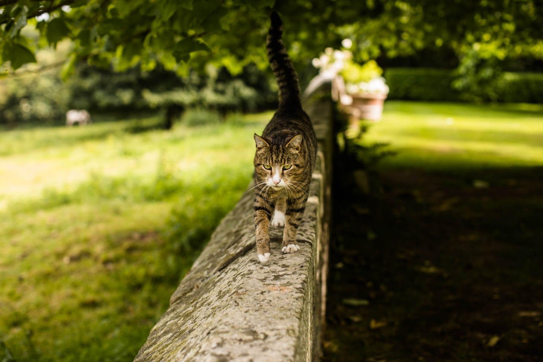 Pimhill Barn Cat