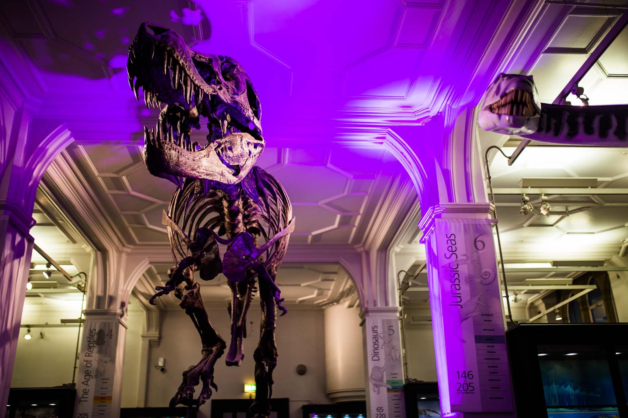 Manchester Museum Stan T-Rex